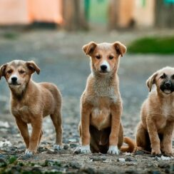Four Puppies Rescued At A Steelyard