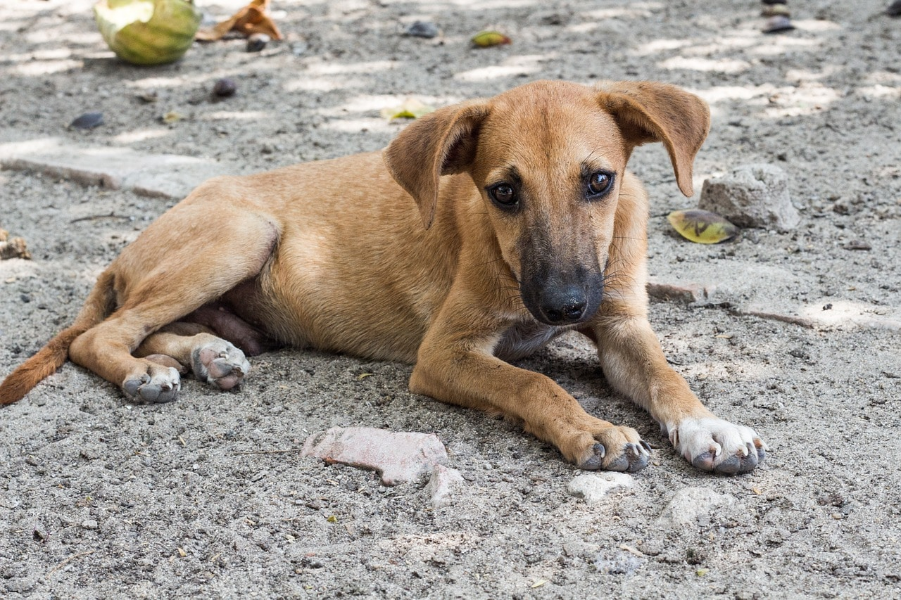 Recovery Journey Of A Stray Dog