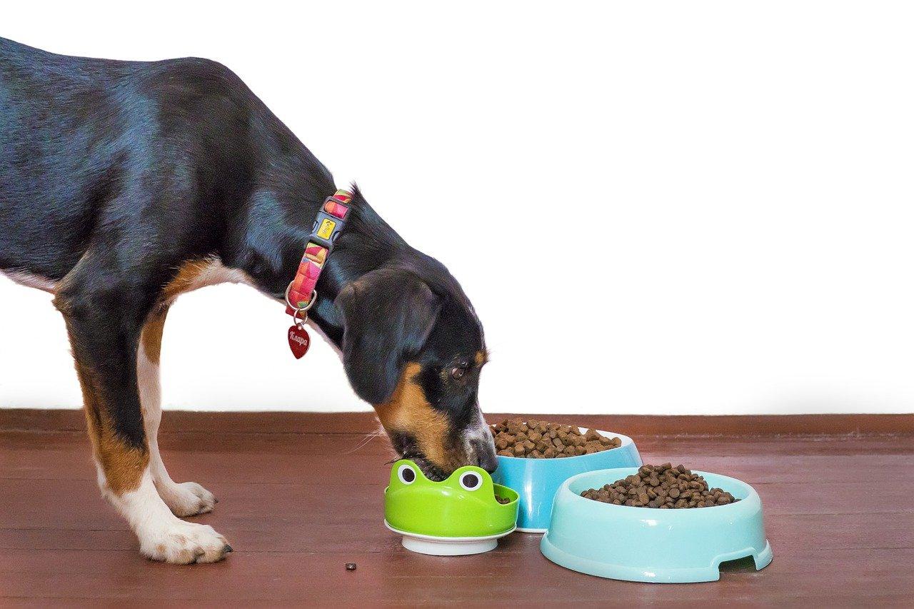 dog, pet, food