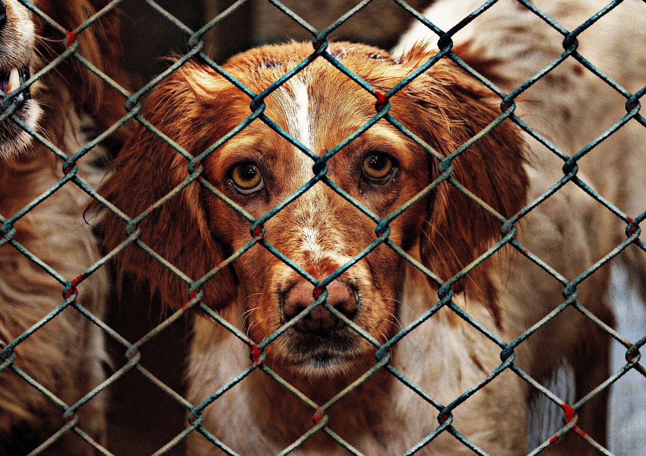 Why You Should Rescue A Dog