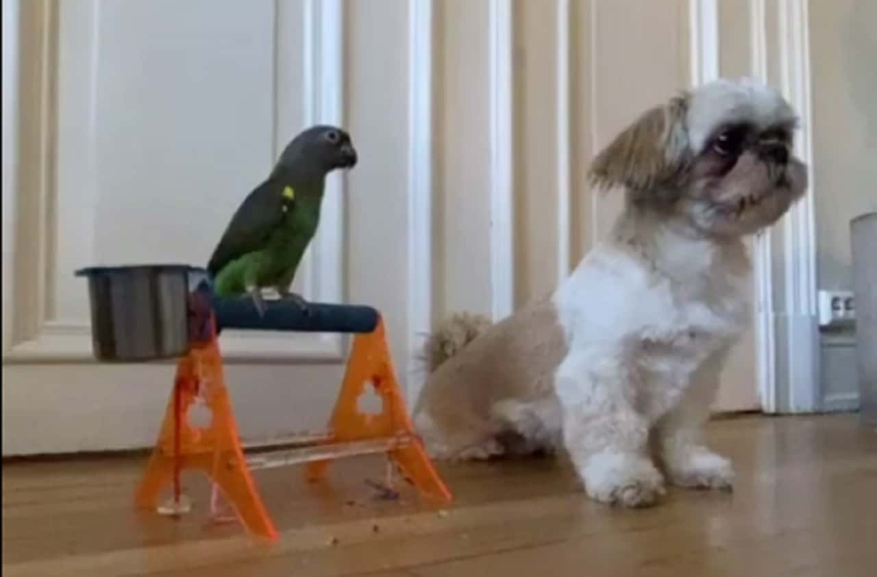 Pooch Performs Tricks With Parrot