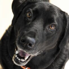 Owner Dumps Dog In The Street