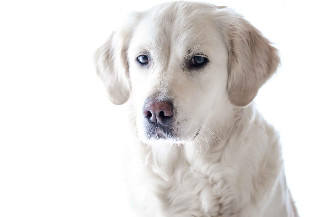 pet photography, dog, animal