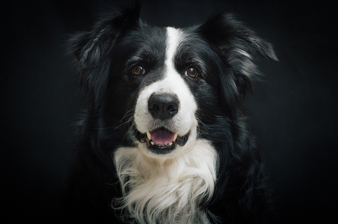 Looking For A Smart Dog, Here Are Ten To Consider.