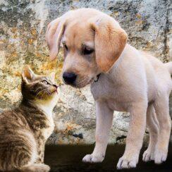 Small Kitten Acts Like A Boss