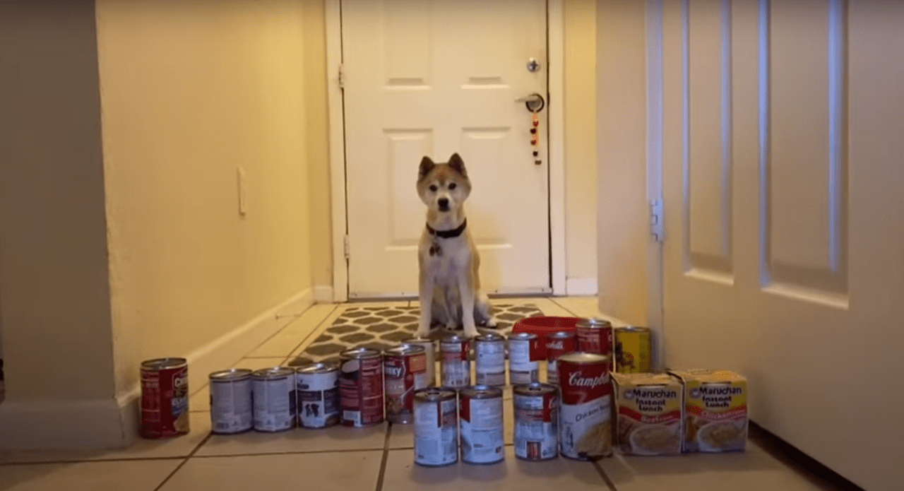 Loveable Dog Is Thrown A Challenge