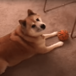 Dog Sings Out
