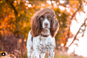 This Dog Has Hair Like A Rock Star.